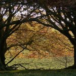 Spring in Tatton Park, Cheshire, England – May 201…