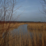 RSPB Old Moor – Dearne Valley in Yorkshire, Englan…