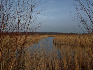 RSPB Old Moor - Dearne Valley in Yorkshire, England - February 2013