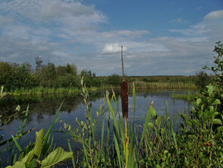 RSPB Dearne Valley - Old Moor in South Yorkshire, England - September 2011